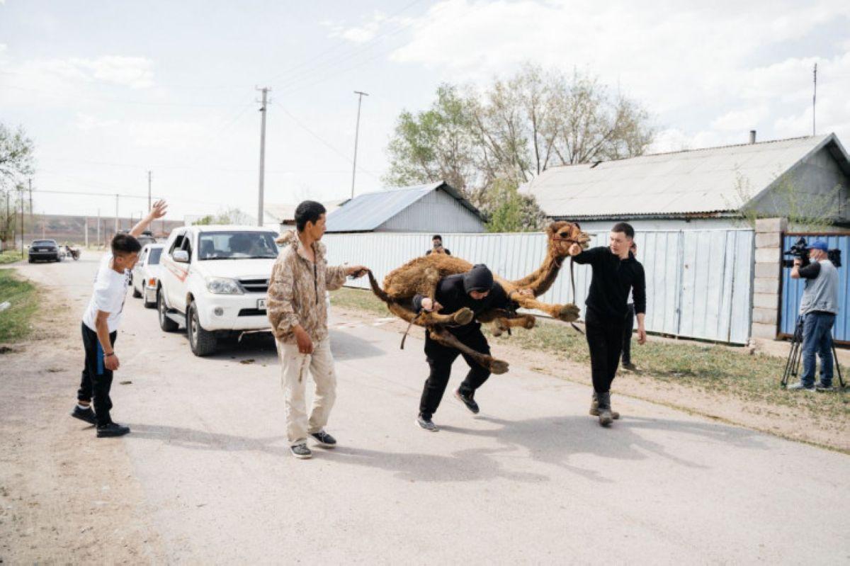 Түйе көтеріп, үш көлікті сүйреген қазақстандық Гиннесс рекордтар кітабына тағы енді